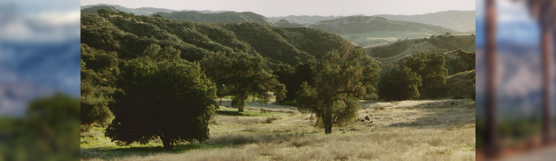Plain of Oaks at Live Oak Canyon Open Space
