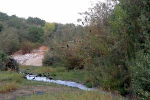 Redlands Conservancy land trust cabinet - San Timoteo Nature Sanctuary